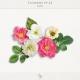 Flowers No.23