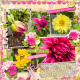 Dahlias In Flower