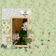 Indoor gardening: pelargonium