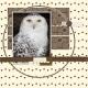 Owls #3