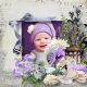 Lavender Fantasia Layout