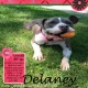 Misfit Delaney!