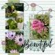 Beautiful Cayucos Flowers