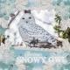 Glorious Snowy Owl