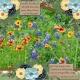 Consider the lilies of the field... (jdunn)