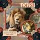 CATS! (JDunn)