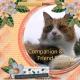 Companion & Friend (GJones)