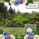 Serenity in the Garden (GJones)