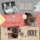 The 3 Cats | November 2017