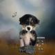 Finn As A Puppy