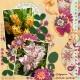 Botanic Gardens (Rosy Posy)