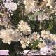Live life in full bloom (Lush Lavender)