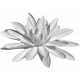 Pond Life Water Lily Template 1