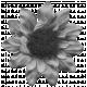 Flower 022 Template