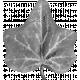 Leaf Template 001