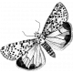 Butterfly Template 003