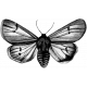 Butterfly Template 004