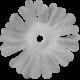 Flower Template 08