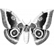 Butterfly Template 008