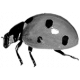 Insect Template 002